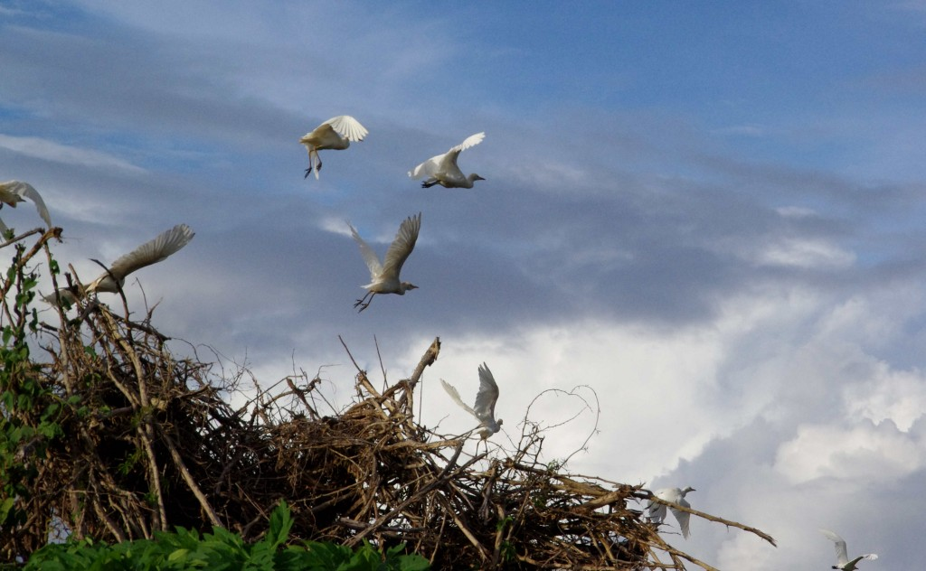 Oiseaux Duchêne 2