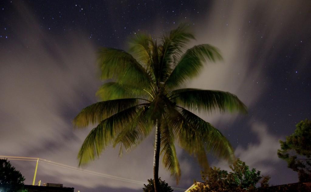 Cocotier jardin nuit