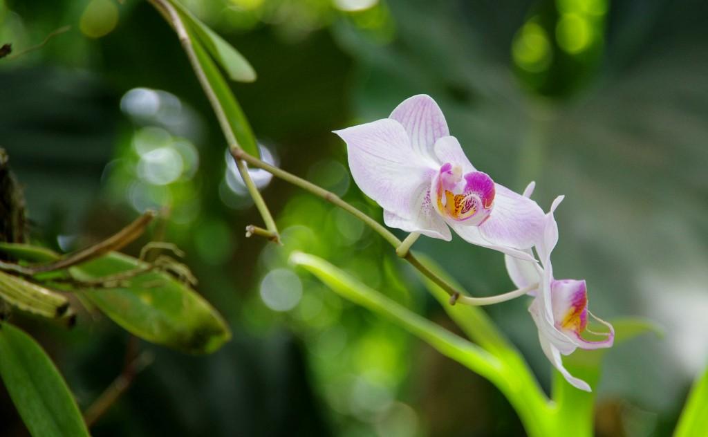 Fleur Coluche 4