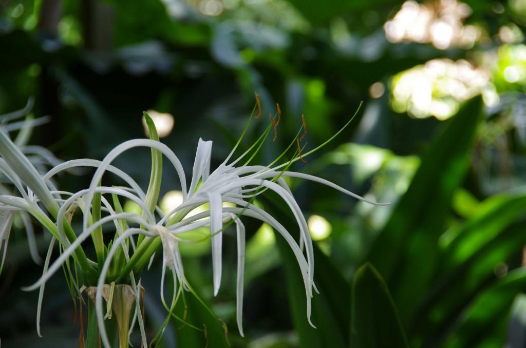 Fleur Coluche 7