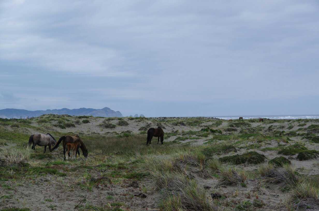 tmp_Chiloé plage vue cheval 21831661089