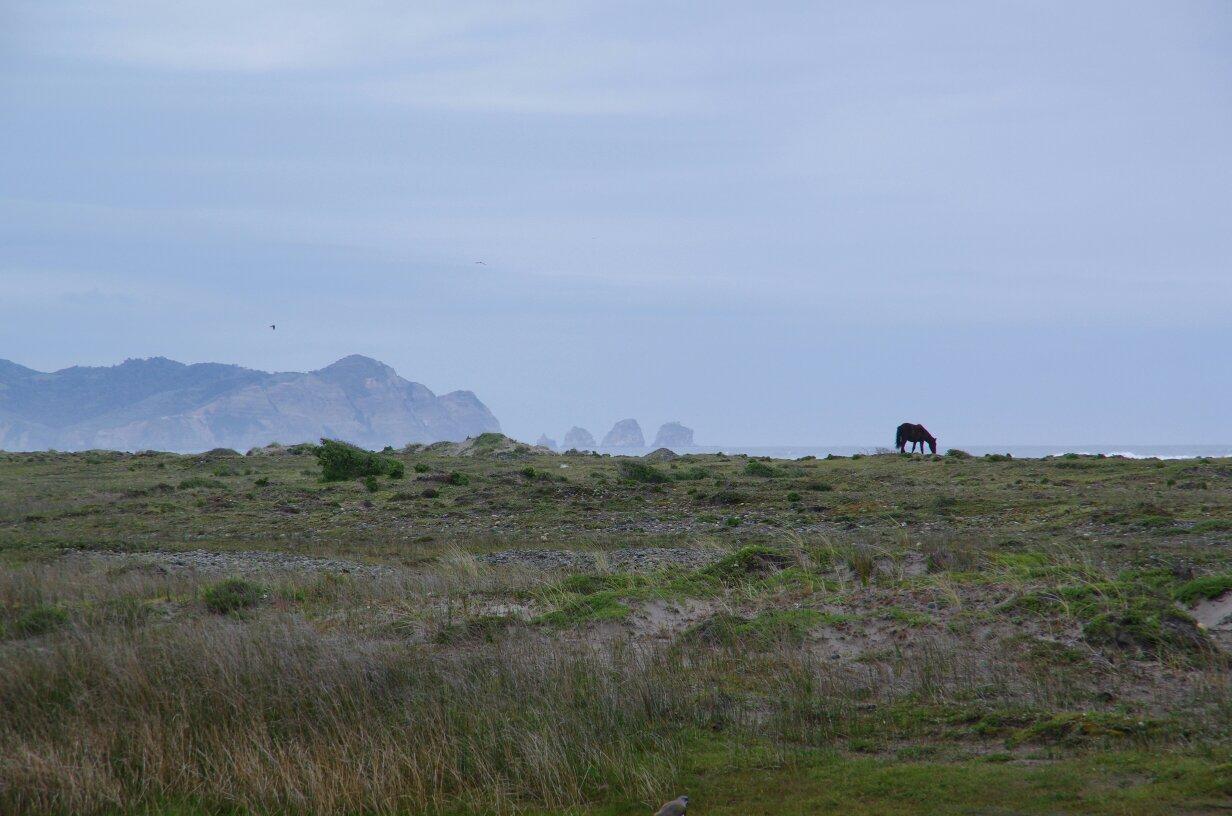 tmp_Chiloé plage vue cheval1061671531
